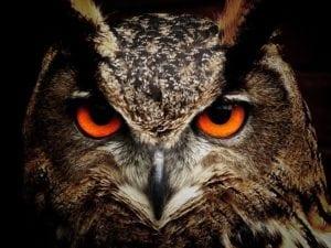 Pisces Sign Symbol Owl