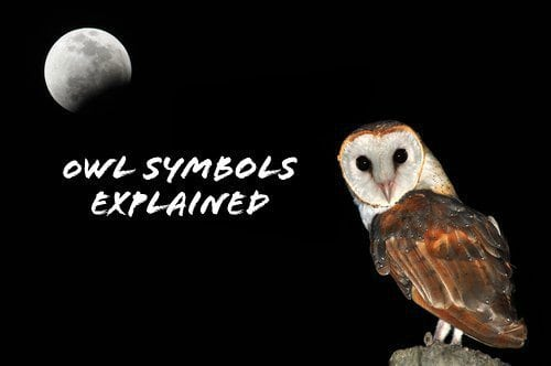 What Owl Tattoo Symbols Mean For Guys Guy Counseling