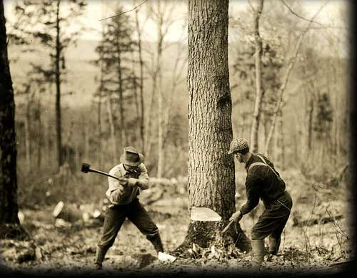 lumberjacks cutting tree old timey