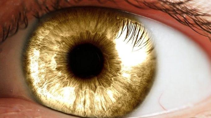 amber golden eyes