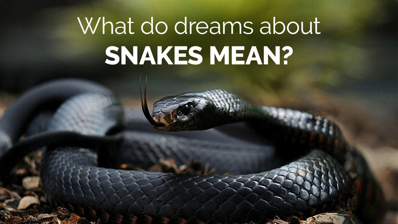 What Snakes Mean and Symbolize in Dreams | Guy Counseling