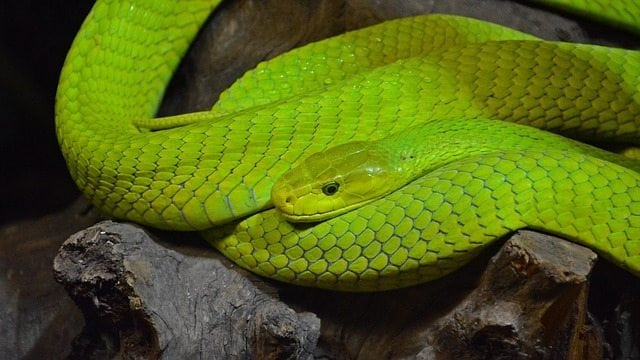 snake dreams, symbols and psychology