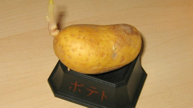 A ripe potato on a small black box as a gift