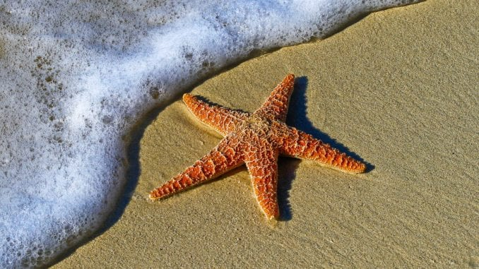 starfish in your dreams