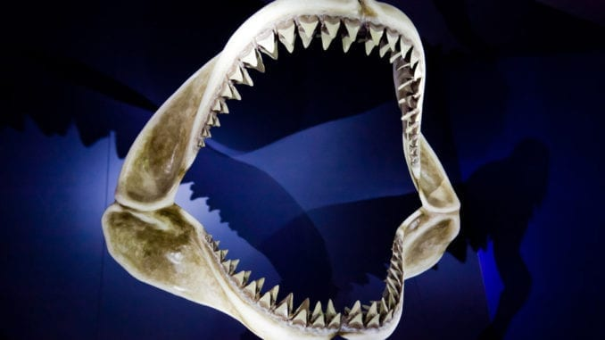 shark teeth in dreams