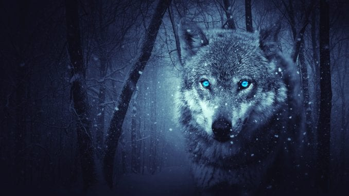 wolf symbols